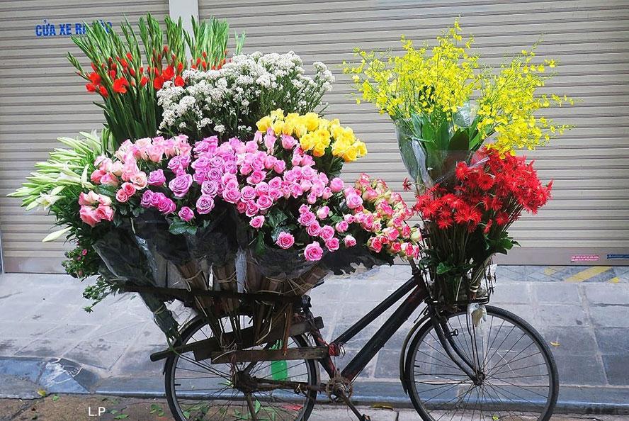 Hà Nội và hoa