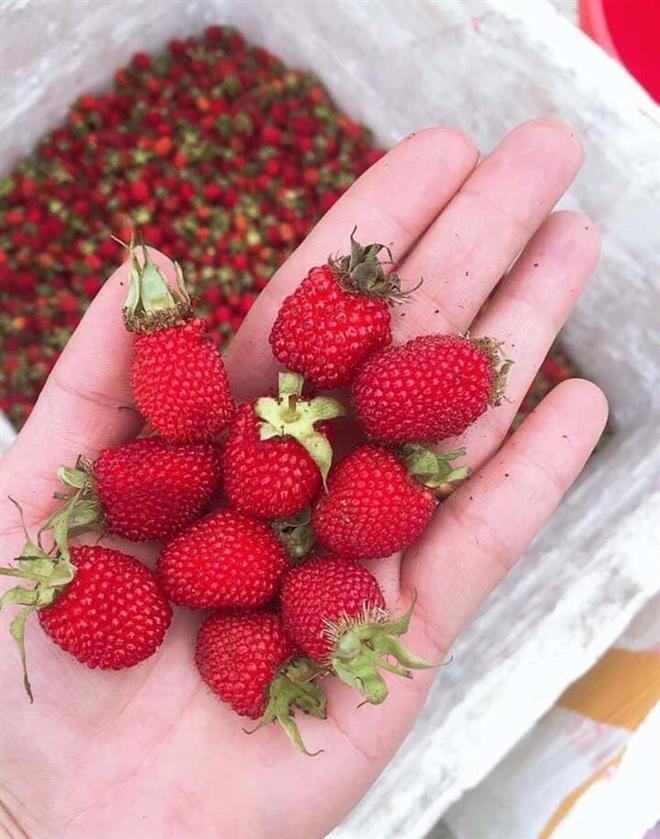 Người Hà Nội lùng mua quả rừng đắt đỏ
